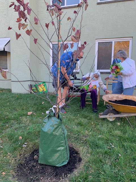 "Virginia throws dirt for ""Doc's Redbud tree"
