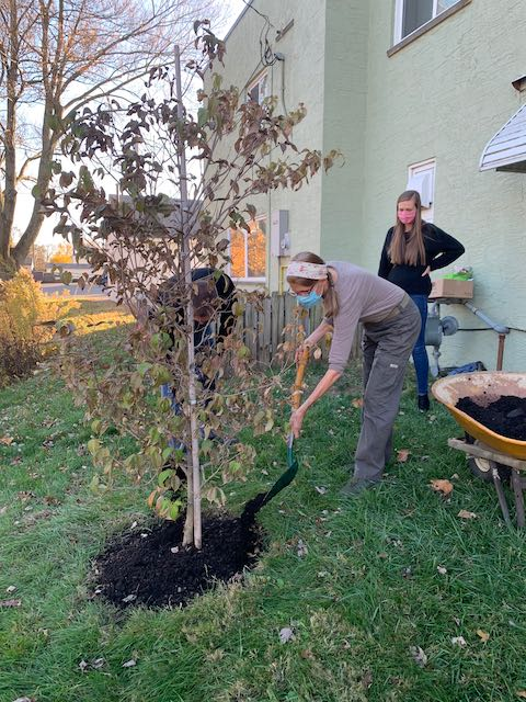 Cari and Ben place direct for Loraine's White Dogwood tree